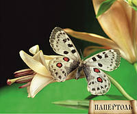 Папертоль Бабочка 2 РТ140006