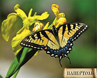 Папертоль Бабочка 3 РТ140007