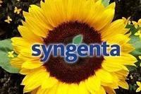 Семена подсолнечника  SY_FLAMENCO