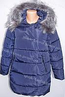 Молодежная женская зимняя куртка стиль 2016/2017 синяя