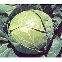 БАЛБРО F1 - семена капусты белокочанной, 2 500 калибровка, Hazera