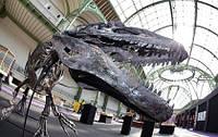Скелет аллозавра продан на французском аукционе за более чем €1,1 млн