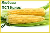Кукуруза Любава 279 МВ (ФАО - 270) - ПСП Колос