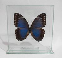Сувенир - Бабочка под стеклом Morpho peleides
