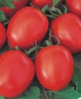 Семена помидора Бенито F1 5 г семян детерминантный