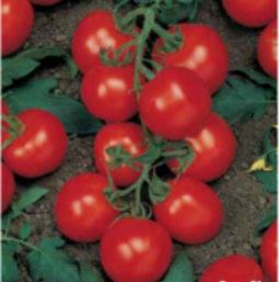 Семена помидора Ричи F1 5 г семян полудетерминантный