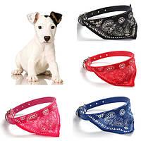 Ошейник платочек для маленьких собак