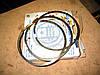 Кольца поршневые КамАЗ Евро-1 (дв. 740.11-240) П/К (МОТОРДЕТАЛЬ)
