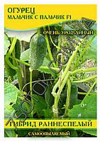 Семена огурца  Мальчик  с Пальчик F1, самоопыляемые, 100г, фото 1