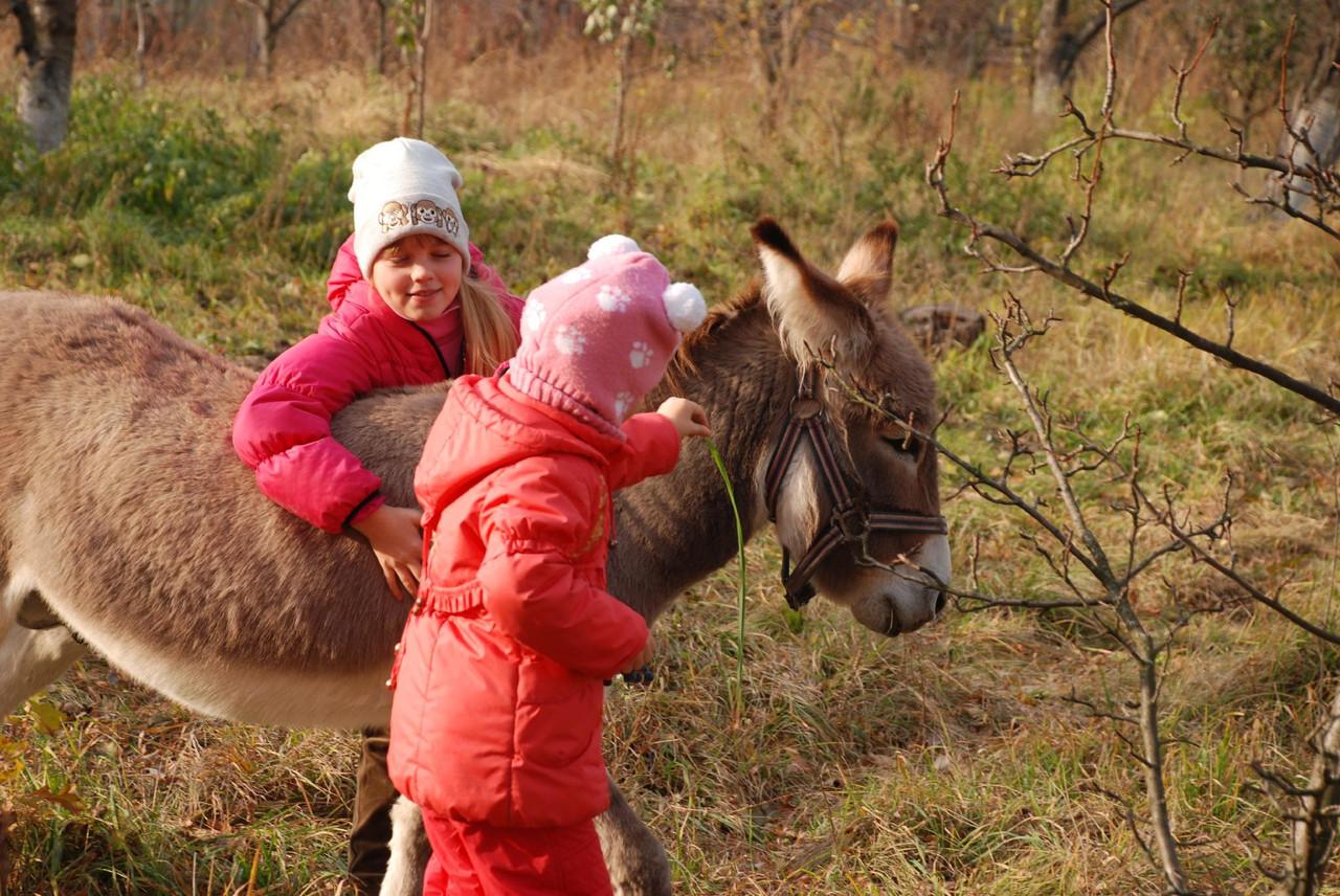 Фото с карликовым пони или осликом - фотосессия на нашем хозяйстве - «Планета животных» в Киеве