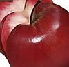 Яблоня Сирена. (М.9) Летний сорт.
