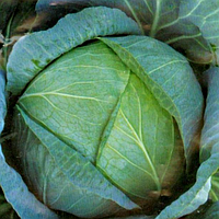 Семена капусты б/к Бирюза 100 гр. Коуел (Сатимекс) - банка