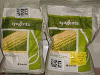 Семена кукурузы Спирит F1 (Syngenta) 100000 семян / 100 тыс сем - ранняя (73 дня), сладкая
