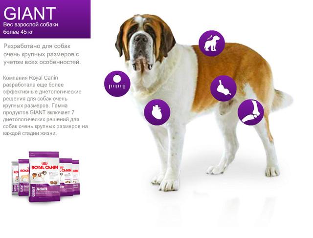 Royal Canin Giant для собак вагою понад 45 кг