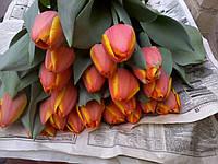 Тюльпан к 8 марта Дримс