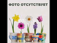 Семена Дельфиниума Оскар, 500 семян, Kitano Seeds, Mix