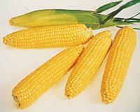 Семена сахарной кукурузы Леженд F1, от 5 г, Clause