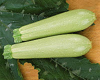Семена кабачка Искандер F1, от 10 семян, Seminis