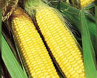 Семена сахарной кукурузы Трофи F1, от 5 г, Seminis