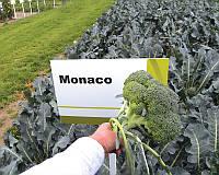Семена капусты брокколи Монако F1, от 20 шт, Syngenta