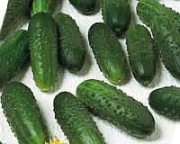Семена огурца Маринда F1, от 10 семян, Seminis 10 шт.