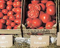 Семена томата детерминантного Бобкат F1 Syngenta 1 000 шт