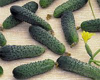 Семена огурца Меренга F1, от 10 семян, Seminis 10 шт.