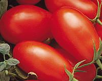 Семена томата детерминантного Хайпил 108 F1, 1000 шт, Seminis