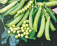 Семена гороха Преладо, 100 000 шт, Syngenta