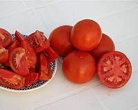 Семена томата детерминантного Шеди Леди F1, от 10 шт., Nunhems