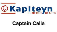 Captain Calla (Капитан Калла)