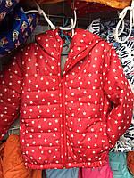 Детская куртка ветровка Звездочка для девочки оптом 3-7 лет коралл
