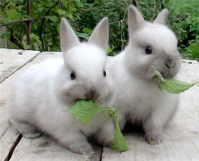Премикс, готовый корм для кроликов.