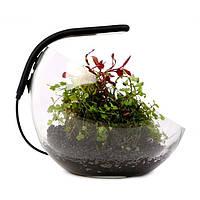 Collar Aqualighter Pico Soft black LED светильник черный для круглых аквариумов и флорариумов