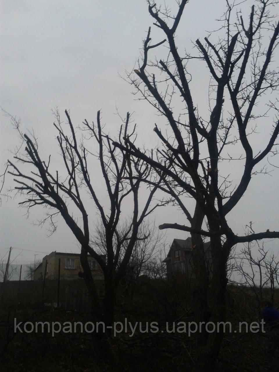 Обрезка садовых деревьев Подрезка фруктовых деревьев
