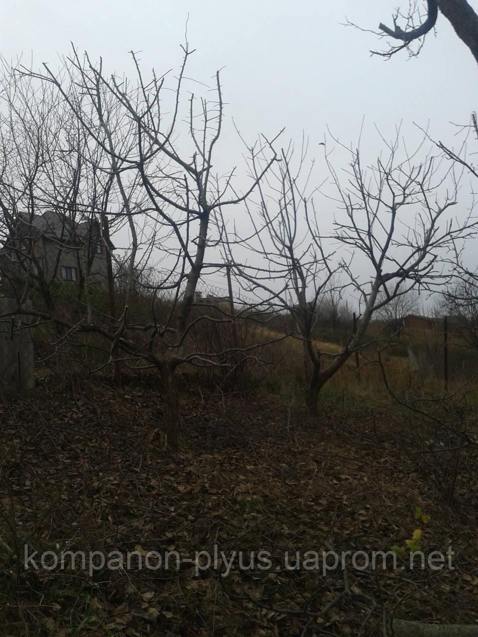 Обрезка деревьев в саду