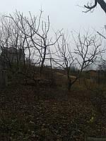 Обрізка дерев в саду