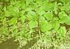 Агротехнологии сегодня. Точный высев – помощь растению.