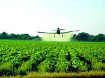Инсектициды - надежная защита ваших агрокультур!