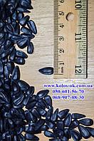 Семена подсолнечника Рекольд (под Гранстар) ЭКСТРА