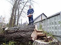 Удаление дерева Удалить дерево Срезать дерево на участке