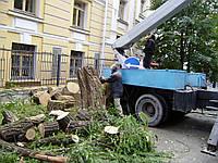 Спил дерева Удаление деревьев