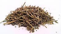 Якорцы стелющиеся трава, фото 1