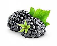 Ежевика (Blackberry)