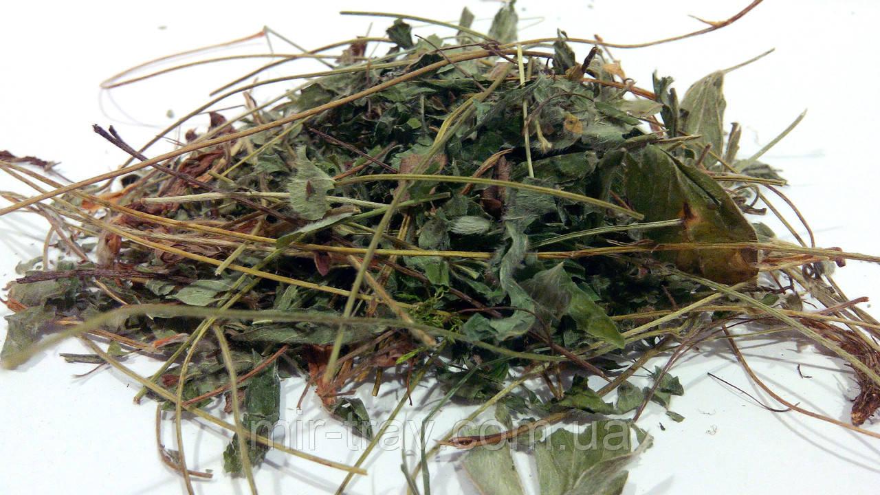 Лапчатка белая трава 100 грамм (пятипал)