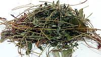 Лапчатка белая трава 100 грамм (пятипал), фото 1