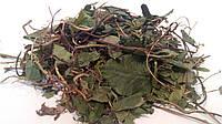 Боровая матка трава 100 грамм (Ортилия однобокая, Orthilia secunda)