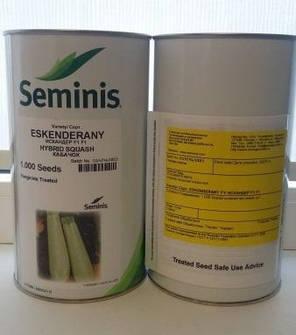 Семена кабачка Искандер F1 (Seminis), 1000 семян — ультра-ранний гибрид (40-45 дней), светлый , фото 2