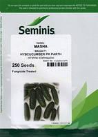 Семена огурца Маша F1 (Seminis) 250 семян - партенокарпик, ультра-ранний гибрид (40-45 дней)