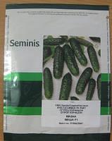 Семена огурца Маша F1 (Seminis) 1000 семян - партенокарпик, ультра-ранний гибрид (40-45 дней)